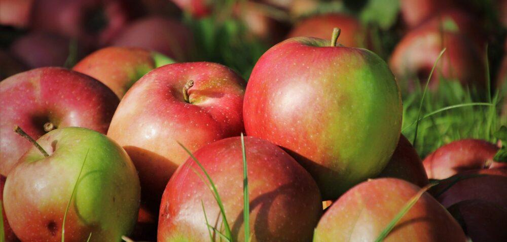 Sytuacja na rynku jabłek – Najnowsze informacje iprognozy cen jabłek