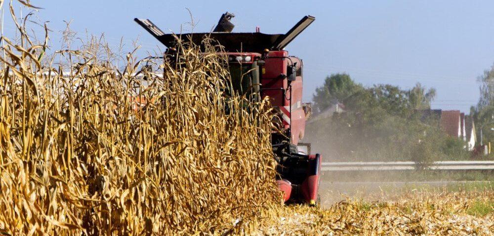 Sytuacja na polach. Zbiory kukurydzy na ziarno 2020 istan ozimin