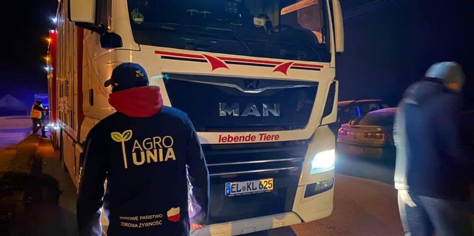 Transport niemieckich tuczników zatrzymany przez rolników