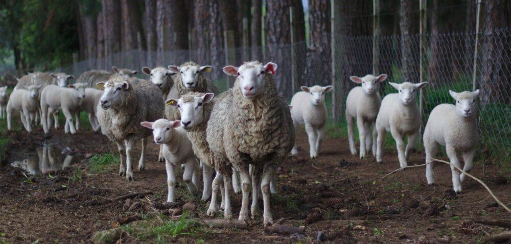 Dobrostan zwierząt 2021 – będą zmiany wprogramie