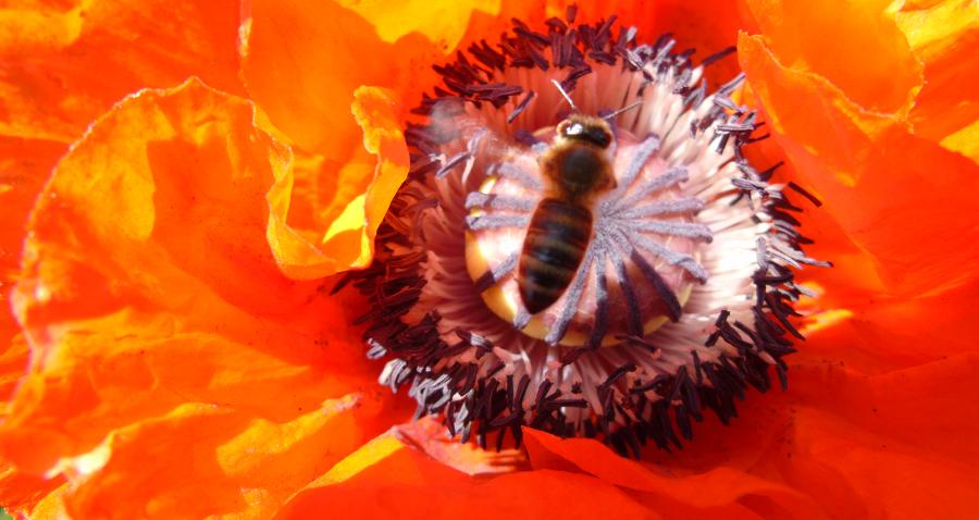 Pszczelarze wnioskują odofinansowanie każdej pszczelej rodziny!
