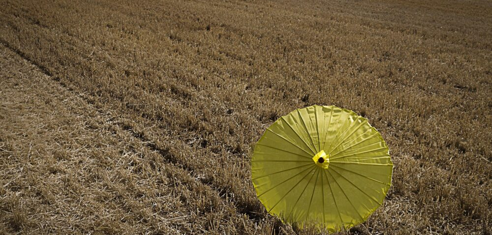 Dopłaty do ubezpieczenia upraw 2021 będą wyższe?