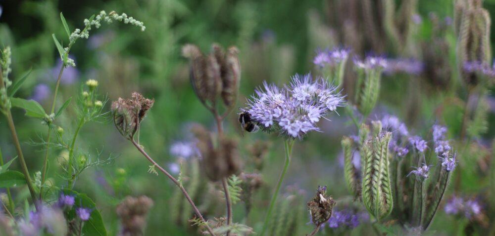 Ochrona roślin wnowej WPR – co proponuje IOR iZwiązki?
