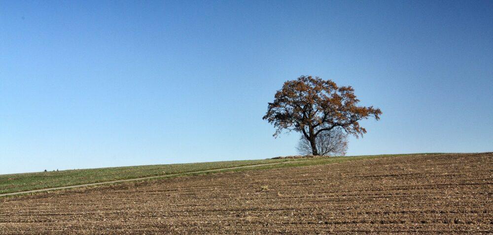 Odrolnienie gruntów – samorząd rolniczy przeciwny zmianom