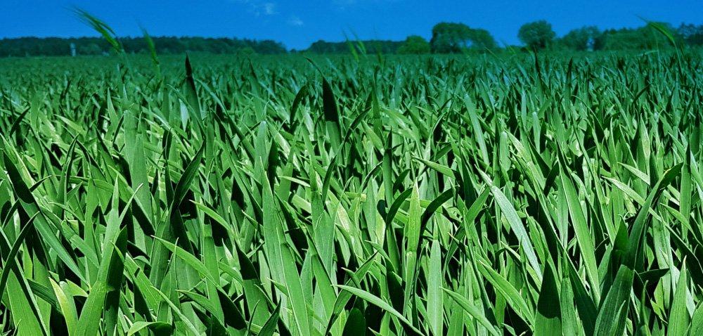 Sposób na zwiększenie azotu wglebie bez nawożenia