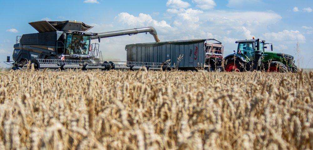 Cena pszenicy 2021 na światowych giełdach spada. Co znotowaniami ziarna wkraju?