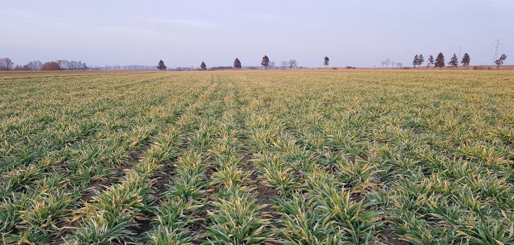 Wielokierunkowa poprawa parametrów gleby