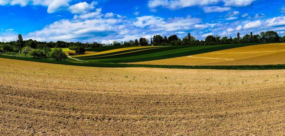 Ceny gruntów rolnych. Gdzie zapłacimy najwięcej, agdzie najmniej?