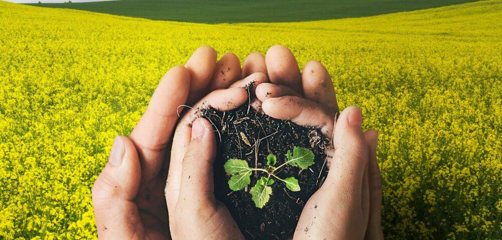 Zaprawy nasienne od Corteva Agriscience wykorzystywane na olbrzymią skalę