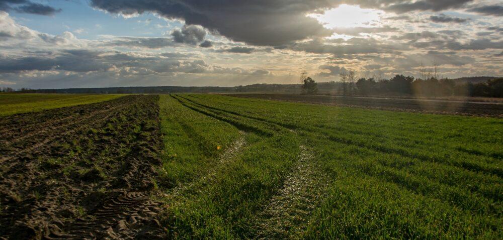 Dopłaty do ubezpieczenia upraw – znajdą się dodatkowe pieniądze?