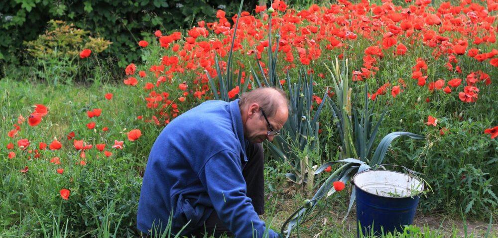Wyjątkowo zimny maj opóźnia prace na warzywniku