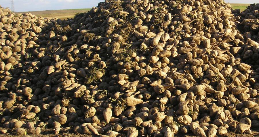 Do jakich upraw są największe dopłaty? Ranking opłacalności