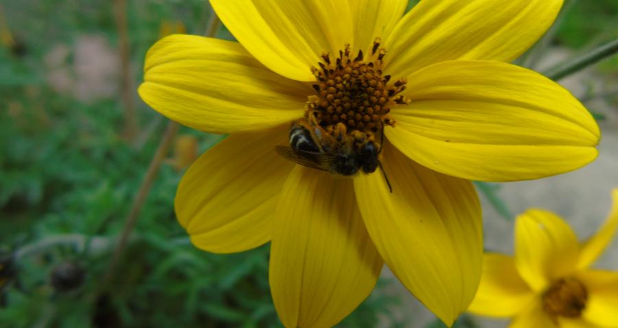 Dopłaty dla pszczelarzy. To sukces Polskiego Związku Pszczelarzy!