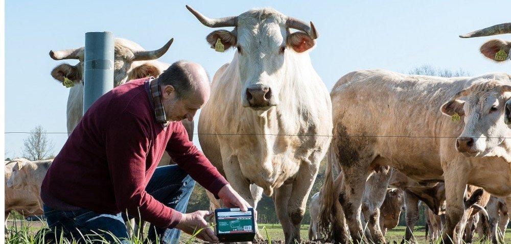 Elektryczne ogrodzenia pastwisk – co musisz wiedzieć?