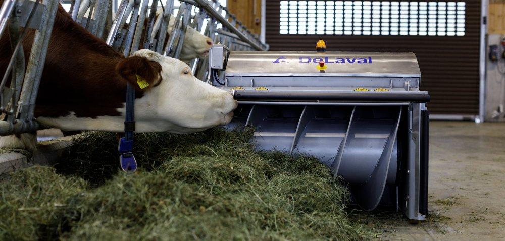 Jak zwiększyć pobranie suchej masy przez krowy?