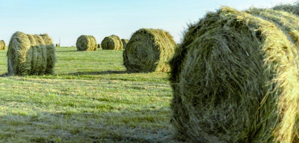 Części do kosiarki, zgrabiarki iprzetrząsarki – sprawdź je zanim ruszysz na łąkę!