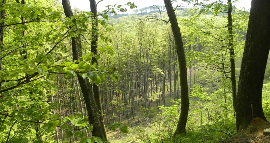 Wsparcie na zalesianie. Weź pieniądze iposadź las!