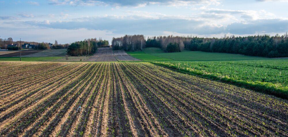 Zamiana nieruchomości. KOWR zamieni nieruchomość rolną na nierolną?