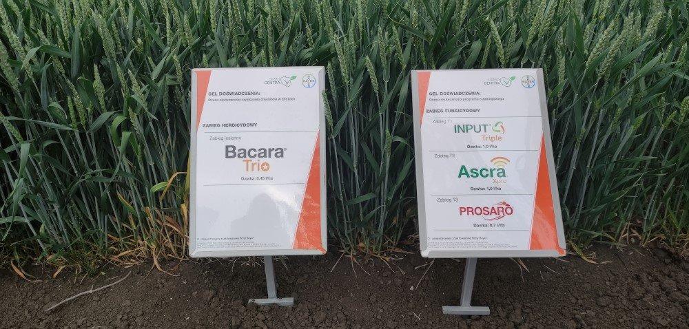 Konferencja polowa Bayer Crop Science. Nowości produktowe 2020-2021