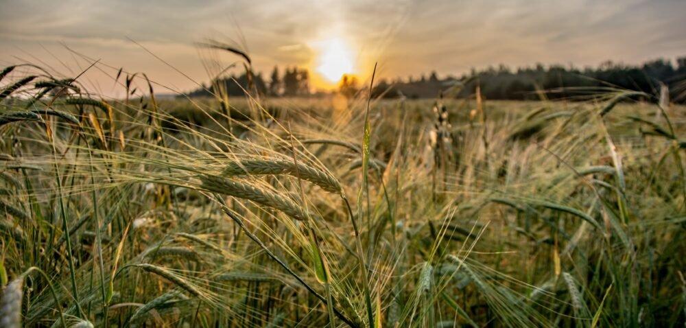 Dofinansowania zPROW. Jakie dotacje dla rolników do wzięcia?