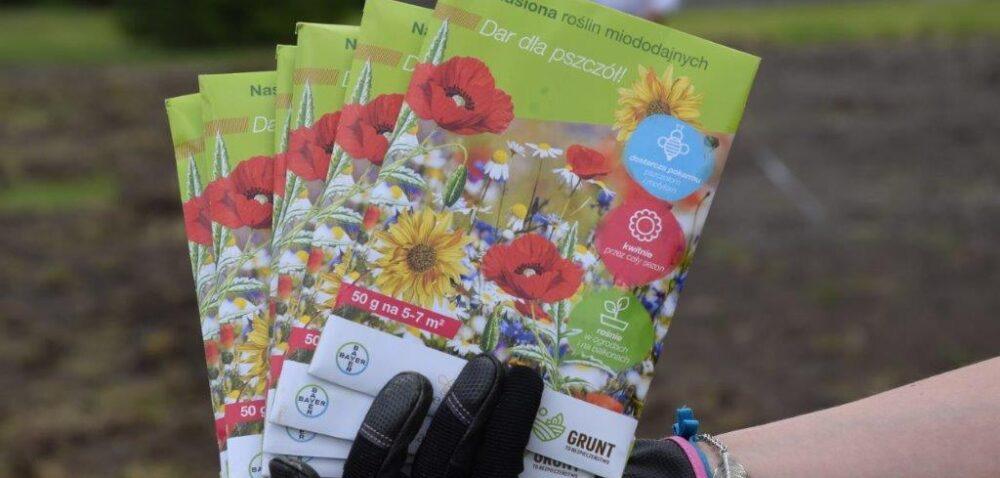Kwietna łąka dla owadów zapylających. Bayer iSiemens wspierają bioróżnorodność