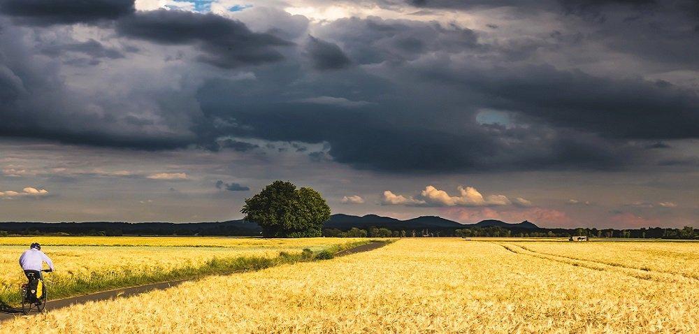 Pogoda na żniwa 2021 – nie zwlekaj ze zbiorem zbóż irzepaku!