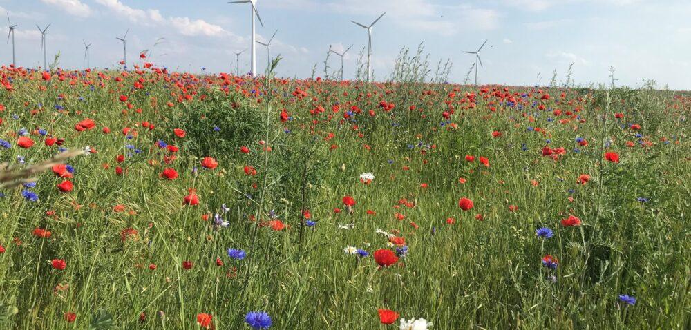 Program dekarbonizacji rolnictwa wEuropie od firmy Bayer