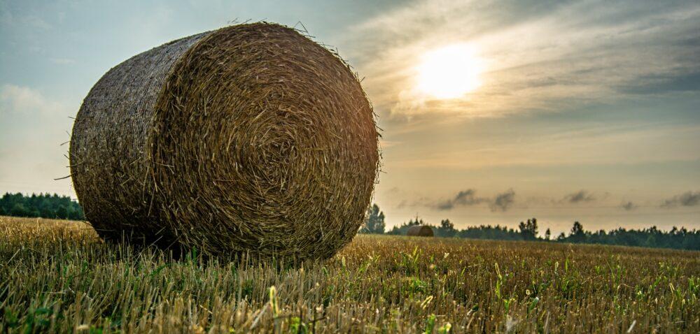 Nabory opomoc zPROW iwsparcie krajowe. Co wybierają rolnicy?
