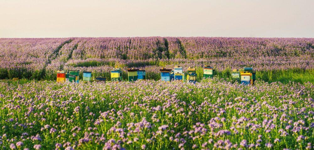 Wsparcie pszczelarstwa 2021 – nowy termin składania wniosków. Sprawdź!