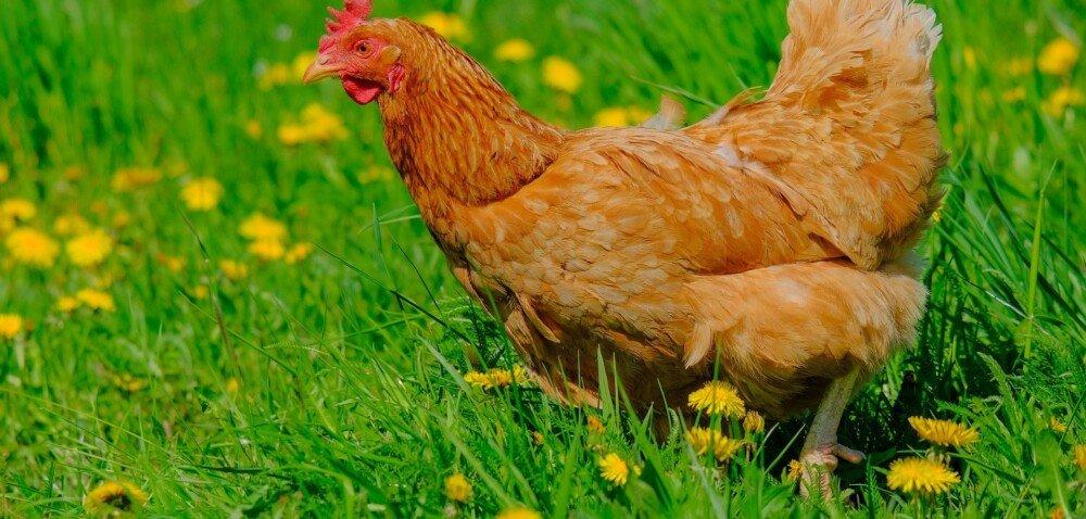 Zielony Ład dla rolników pod znakiem ekologii idobrostanu
