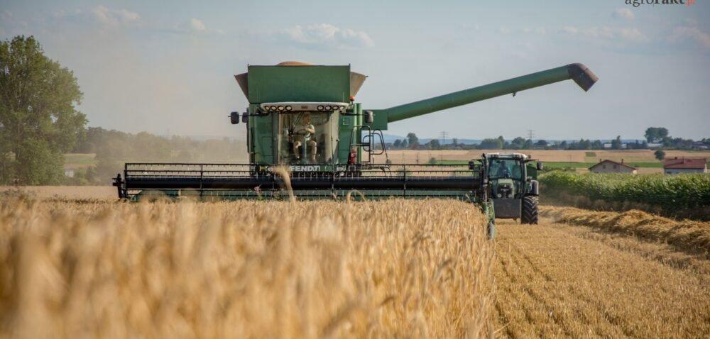 Żniwa 2021. Światowe zbiory zbóż będą rekordowe? Sprawdź!