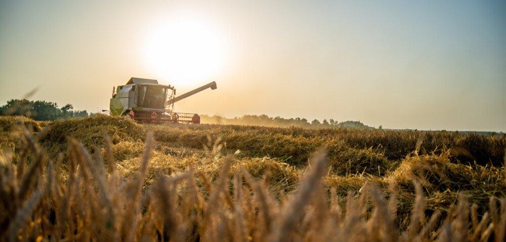 Jakie ceny zbóż wżniwa 2021? Sprawdź szczegóły!