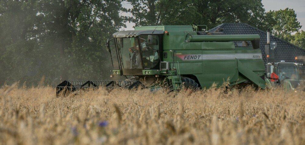 Ceny pszenicy 2021 na starcie żniw. Sprawdź szczegóły!