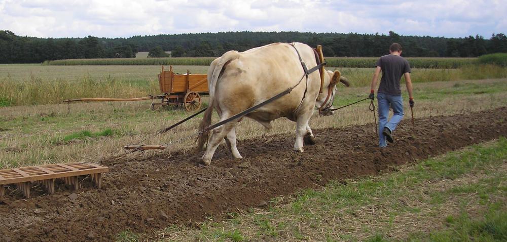 Polski Ład dla rolników, czyli jak zgospodarza zrobić krezusa?