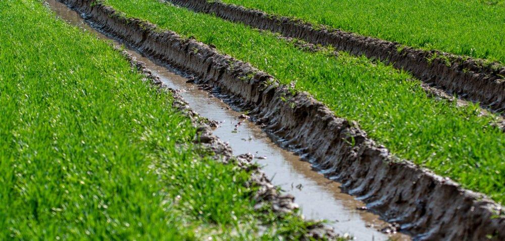 Ubezpieczenie upraw ihodowli rolnej – będą zmiany? Dowiedz się!