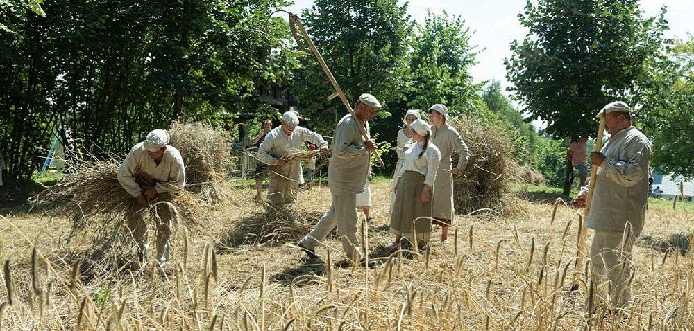 Dawne przygotowania do żniw na polskiej wsi. Jak to drzewiej bywało?