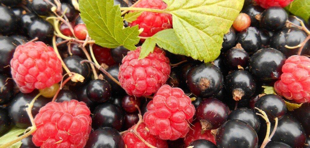 Rynek owoców 2021 – jakie są ceny iprognozy? Sprawdź!