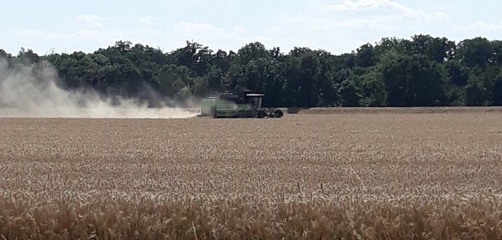 Ceny zbóż prognozy 2021. Przechowywać czy sprzedawać zboża?
