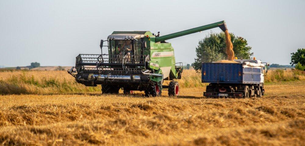 Ceny skupu zbóż 2021. Jakie będą zbiory? Sprawdź szczegóły!