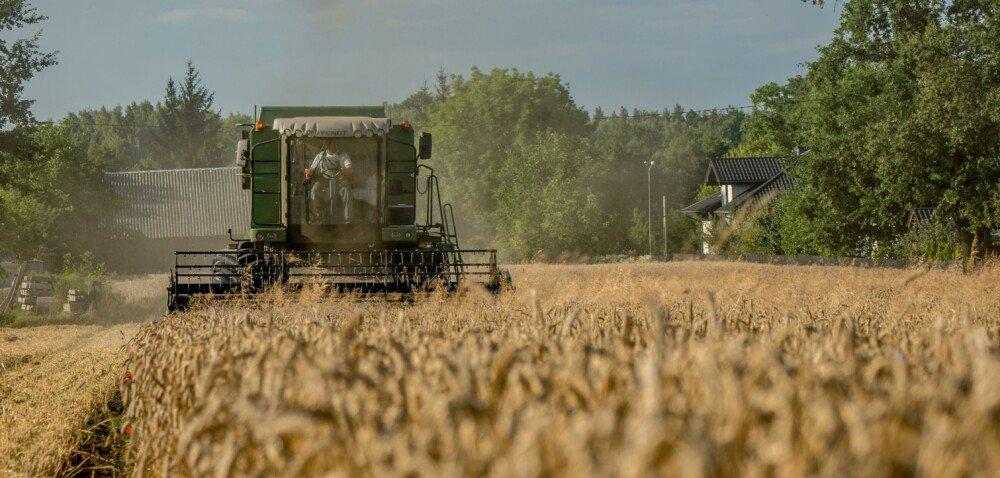 Cena pszenicy 2021 wskupie nadal wysoka? Sprawdź szczegóły!