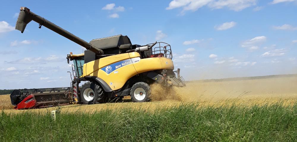 Zbiory pszenicy 2021. Czy plony zbóż spełnią oczekiwania rolników?