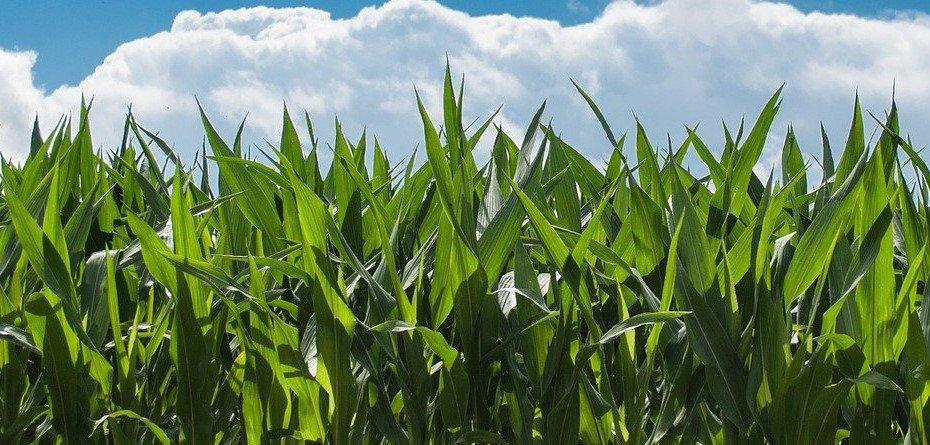 Corteva Agriscience poszerza partnerstwo zElemental Enzymes