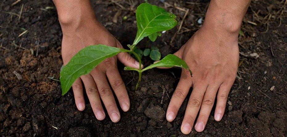 Nestlé: Plany wsparcia regeneracyjnych systemów żywnościowych