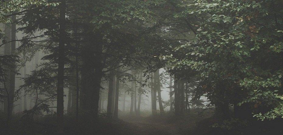Wypłaty premii zalesieniowych – MRiRW podaje nowy termin!
