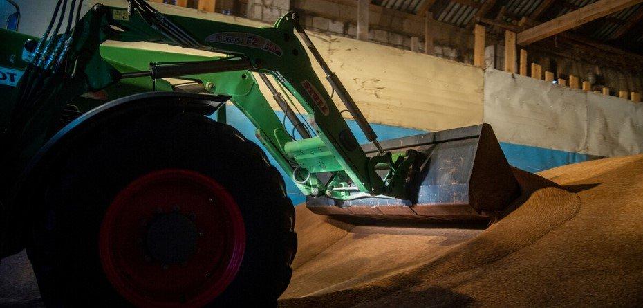 Ceny zbóż wskupach 2021 – pszenica, pszenżyto, żyto