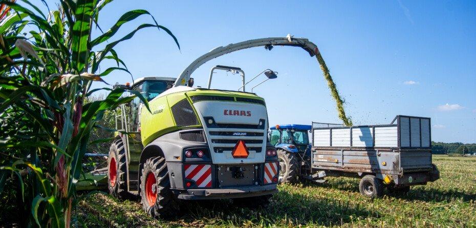 Koszenie kukurydzy na kiszonkę 2021 – jaka cena usługi? Sprawdź!