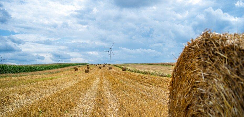 Nowelizacja budżetu 2021. Będzie więcej pieniędzy na rolnictwo!