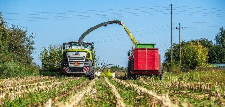 Zbiór kukurydzy na kiszonkę 2021 – jak przebiega? Nie jest źle, ale…