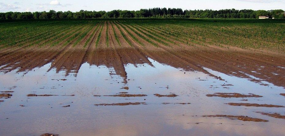 Polisa ubezpieczenia upraw rolnych – jej brak oznacza niższą pomoc