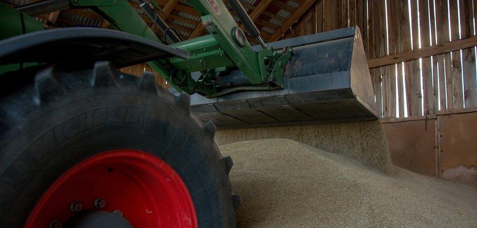 Najnowsze ceny zbóż – pszenica, żyto ipszenżyto